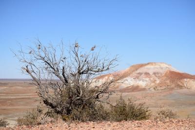 Painted Desert (7)