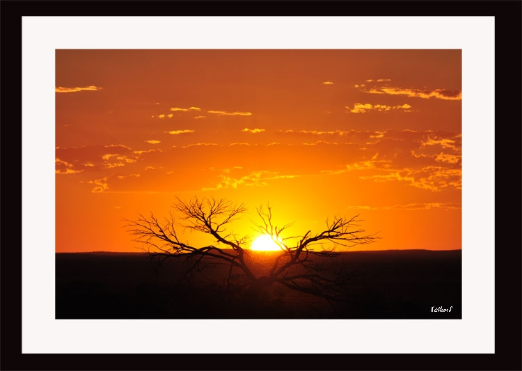 Lone-tree-sunset