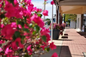 Bougainvillea on Julia Creek's main street