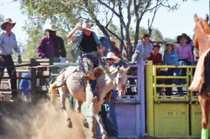 Chaps glittering n the sun while riding a bronc