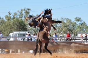 Patterned chaps - riding a bucking bronc
