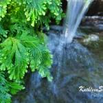 Botanic Gardens (15)