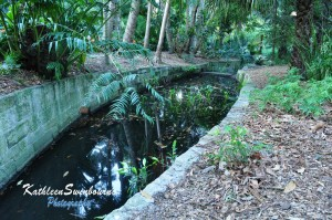 Botanic Gardens Creek