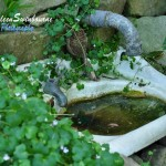 The Secret Garden, Lavender Bay (15)
