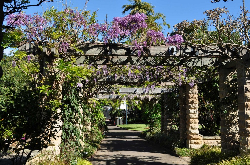 Wisteria-at-the-Gardens
