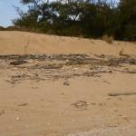 Pennefather-Beach-trash1