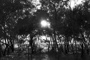 dawn-horserider-thumbnail