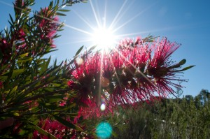 Bottle brush - summer's coming