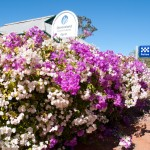 Bougainvillea fence, outback Queensland
