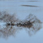 Murrumbidgee reflections June 2012