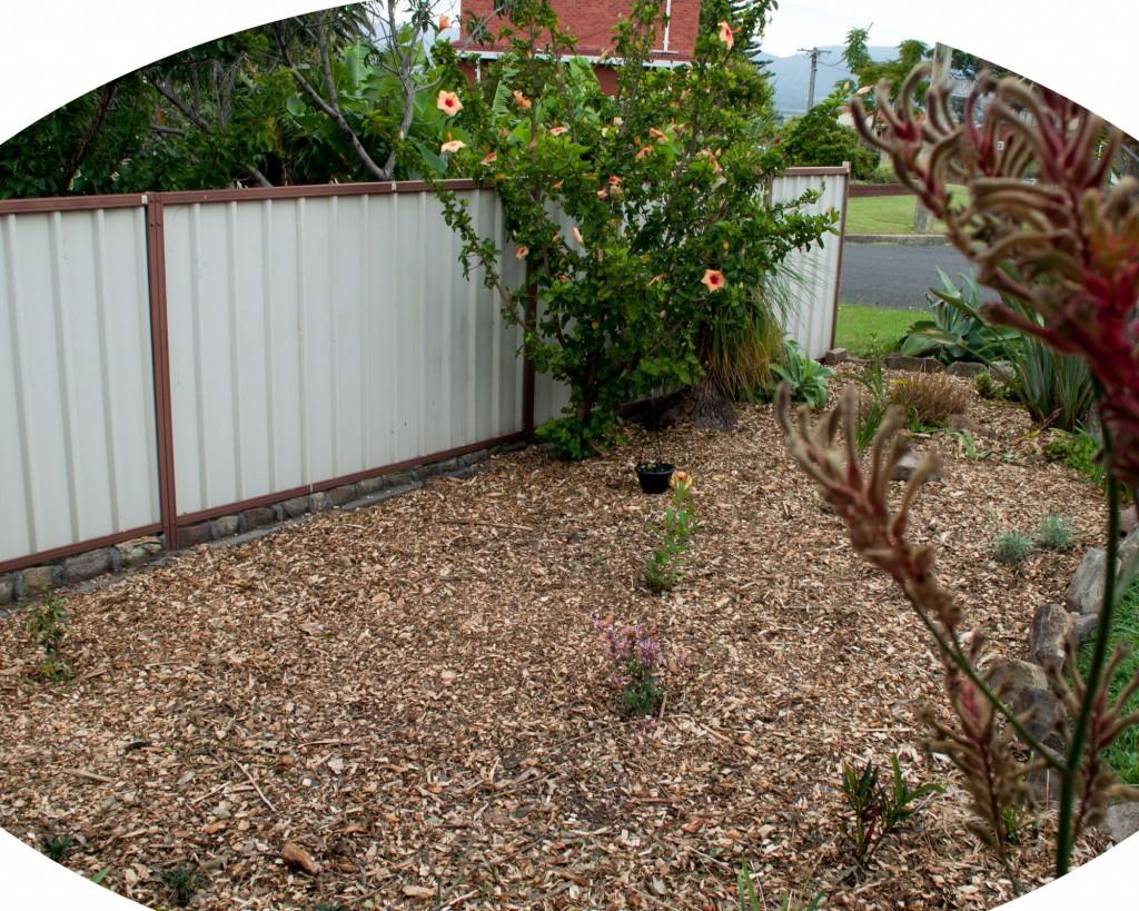 My new garden
