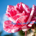 Facebook-cover-stop-and-smell-the-roses