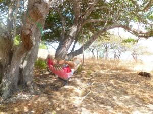 Hammock Cape Melville