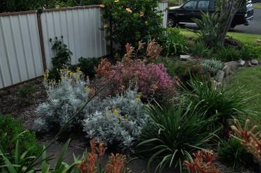 Garden 5 Feb 2015