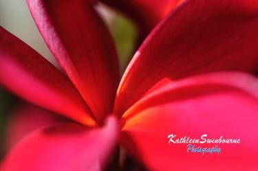Sawtell-flowers-(2)