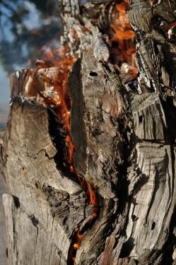 Burning logApril 2015 (2)