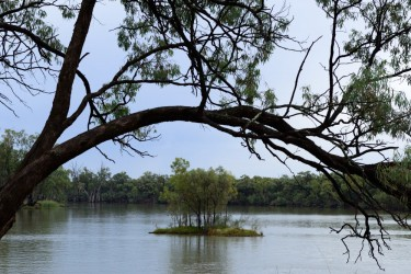 A quiet place on the Murray River, a small island viewed under the frame of an arching gum tree
