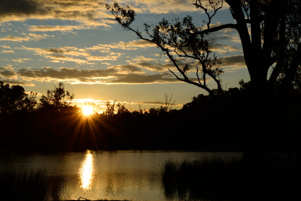 Sunset over the Murray River and gum trees