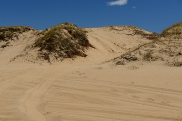 Tracks going over the front revegetated sand dunes