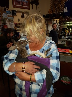 cuddling a baby kangaroo in a slink at the Maree pub