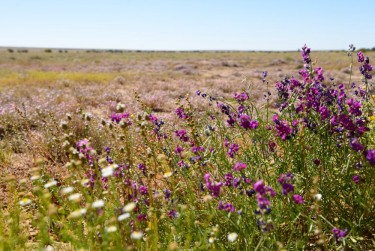 Wildflowers blooming in the desert