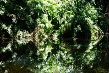 Botanic Gardens reflections_01