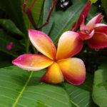 Darwin flowers (3)