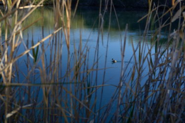 Kingfisher sprin Dalhousie_01