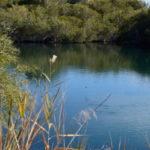 Kingfisher sprin Dalhousie_03