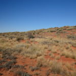 Simpson landscape