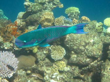Colourful fish and coral on the Great Barrier Reed