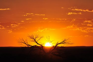 Orange sun setting behind dead tree branches at White Cliffs in outback NSW