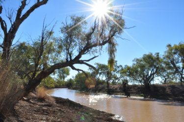 Under the shade of a coolibah tree
