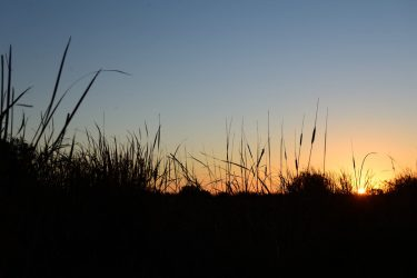 Sunrise through the reeds