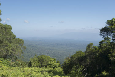 Panoramic vista of rainforest from a peak on the Creb Track